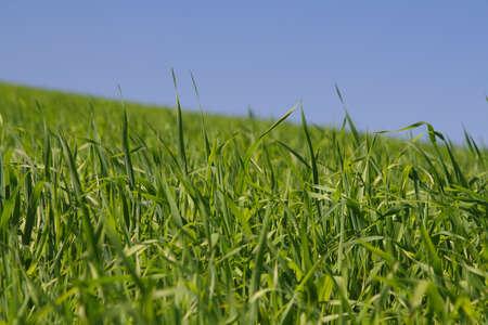 among rich green grass Stock Photo