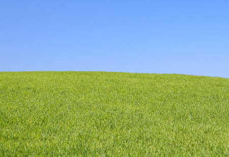 bright meadow Stock Photo - 440988