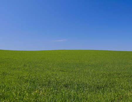 perfect meadow Stock Photo - 441357