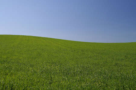 perfect meadow  #2 Stock Photo - 441337