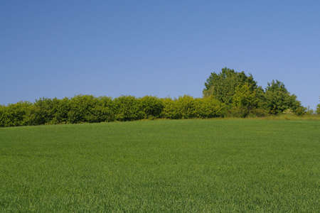 tree line on the edge of a perfect meadow Stock Photo - 443410