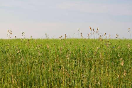 meadow Stock Photo - 458672