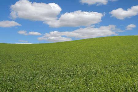 summer landscape #2 Stock Photo - 472201