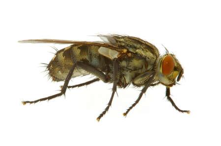 horrifying: fly on white - REAL MACRO