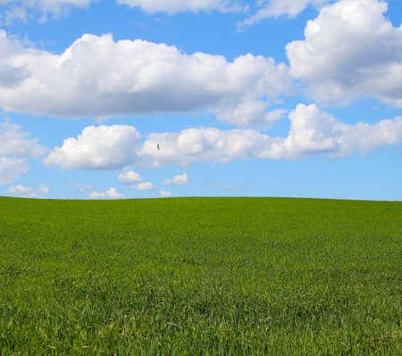 beautiful landscape Stock Photo - 501305