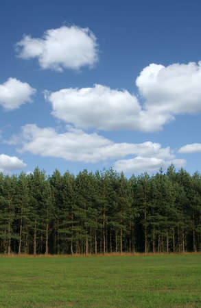 cumulus: tree line with cumulus clouds