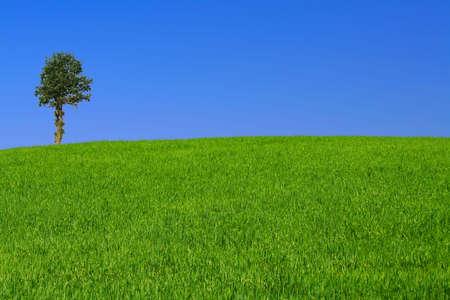 gorgeus landscape with lonely tree #2 Stock Photo - 556946