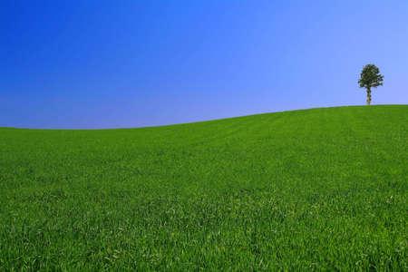gorgeus: gorgeus landscape with lonely tree Stock Photo