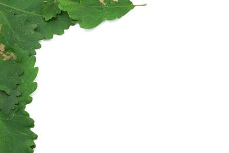 embrasure: oak leaves frame #2
