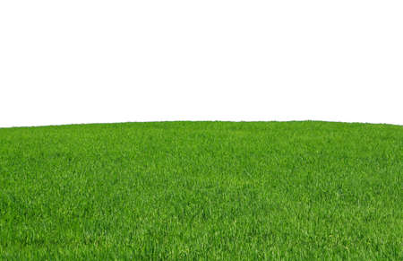 isolated grass field Stock Photo