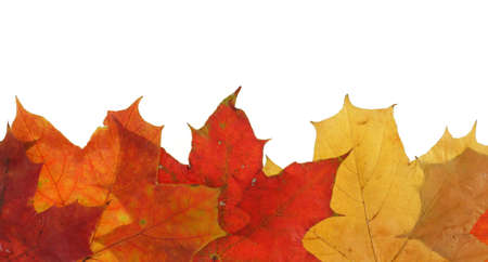 embrasure: maple leaves in line
