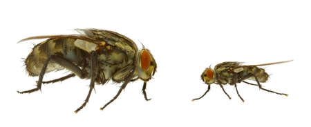 fly in two variants - EXTREME MACRO photo