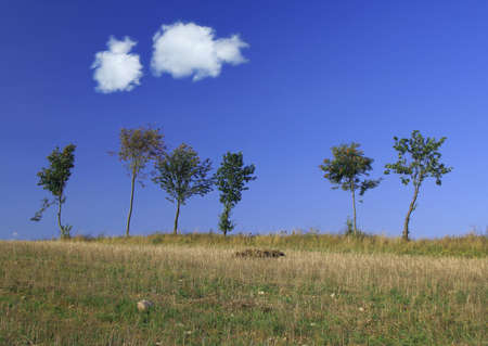 tree line with two cumulus clouds. Stock Photo - 726636