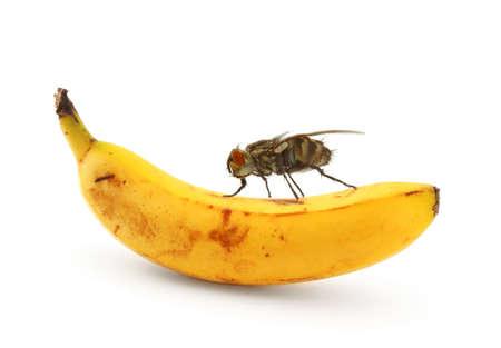 bug sitting on banana photo
