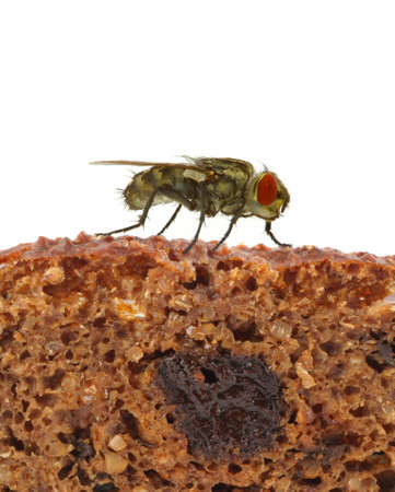 terrifying: home fly sitting on slice of bread