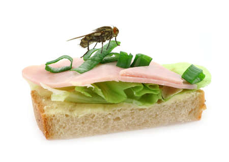 home fly sitting on delicious ham sandwich photo