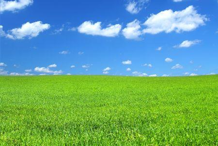 mooie levendige groene zomer veld met een paar stapelwolken
