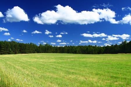 zomer land oog met veld en boom lijn Stockfoto