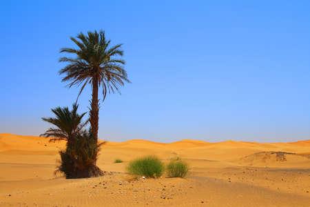 palm tree on Sahara desert Stockfoto