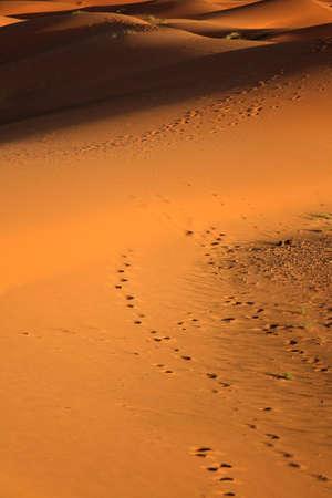 sunset at sand dunes photo