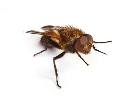 shaddow: home fly on white background, small natural shaddow is visible under the fly