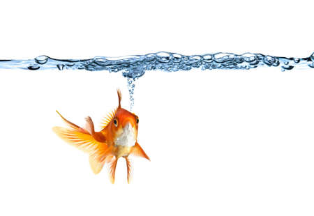 goldfish making air bubbles against white background photo