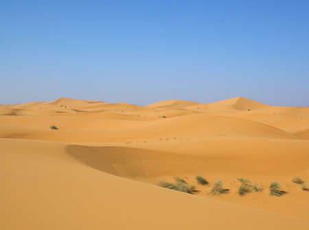 exists: the desert after rainfall, even there vegetation exists Stock Photo