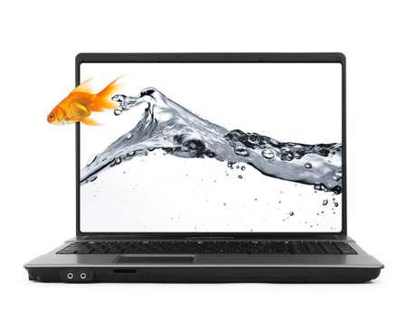 Goldfish springen aus dem Notebook, isoliert auf weiß