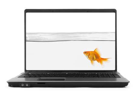 Goldfish innerhalb notebook
