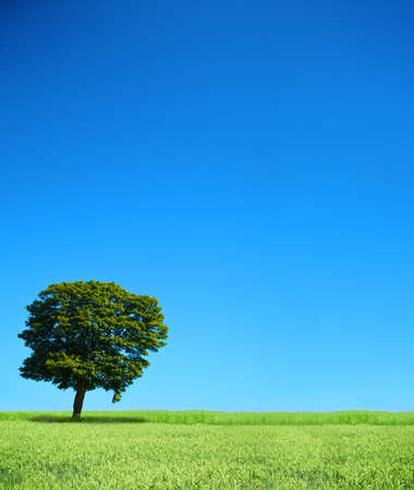 field and lonely tree, cloudless sky in background