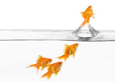 peces de colores: concepto del gran escape