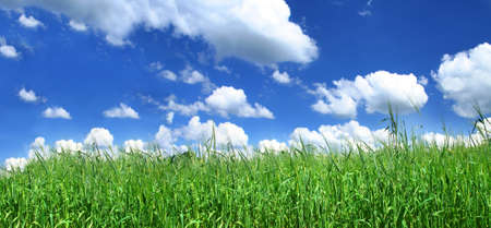 blissful: panoramic view of blissful grassland