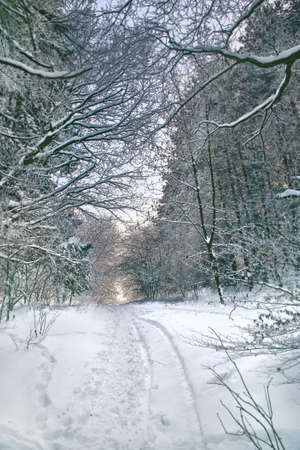 Path in winter forest, focus set in background Stock Photo - 16688991