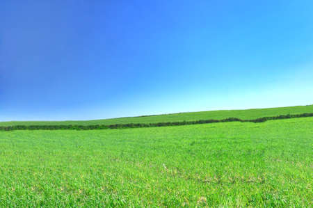 summer country view with cloudless sky