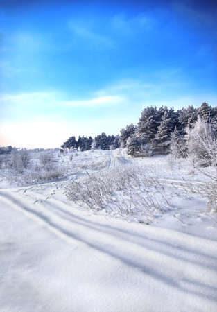 winter road, trees and bushes Stock Photo - 16688990