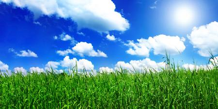 zonlicht over de zomer levendig weide, focus ingesteld op voorgrond Stockfoto