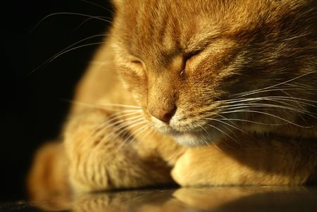 an orange colored cat take a nap in the eveing light photo