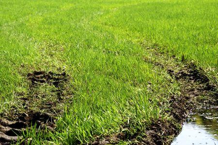 muddy tracks: muddy tire tracks in the green grass
