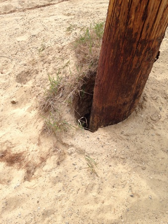 telephone pole: Sand erosion around a telephone pole at the beach