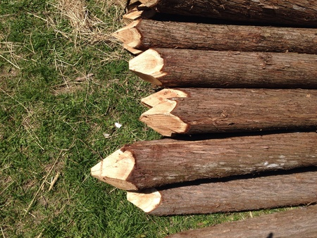 fence: Trees cut into fence posts and stacked in s pile