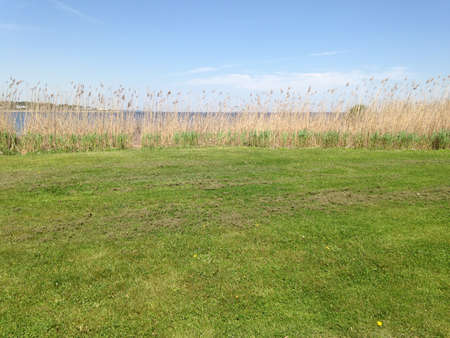 Tall dry grasses at the edge of the green field beside the ocean