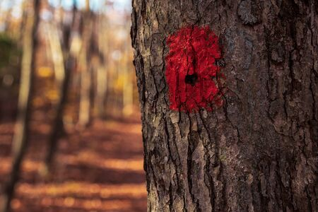 Red Blaze Trail Marker on hiking path. Bushcraft navigation aid in the woods in autumn.