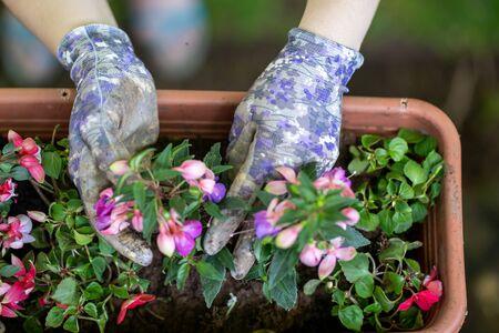 Caucasian woman planting flowers wearing gardening gloves