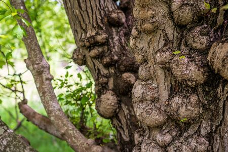 Shallow DOF image of an old tree