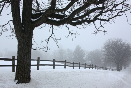 Dense winter fog covers a rural scene with trees and split-rail fence  photo