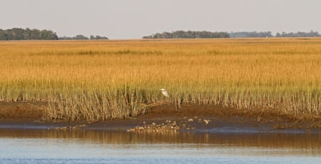 salt marsh: Low tide in a South Carolina salt marsh