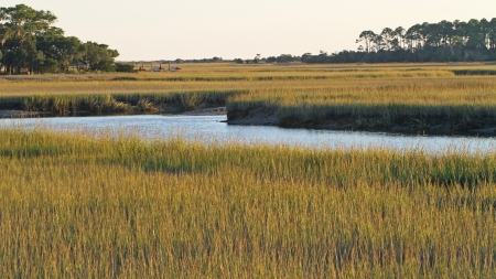 Low tide in a South Carolina salt marsh photo