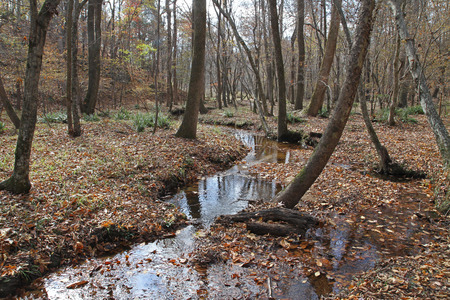 A small stream flowing through a wooded flood plain