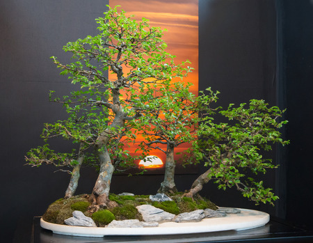show garden: CHARLOTTE, NC - February 28, 2016:  A display of the Japanese art of bonsai at the Southern Spring Home  Garden Show.