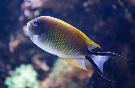 reef fish: Tropical fish against a coral reef background.